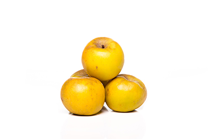 Pomme clochard