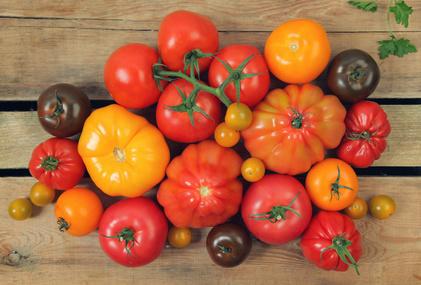 Tomate d'Antan