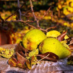 La poire, le fruit des mélanges sucrés – salés