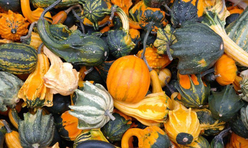Les légumes automnaux aux couleurs chatoyantes