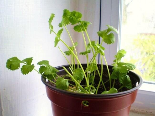 Les légumes à faire repousser chez soi